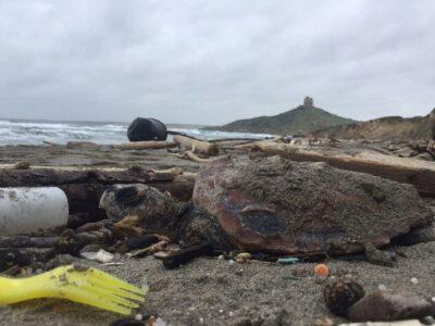 La tartaruga trovata morta a San Giovanni di Sinis